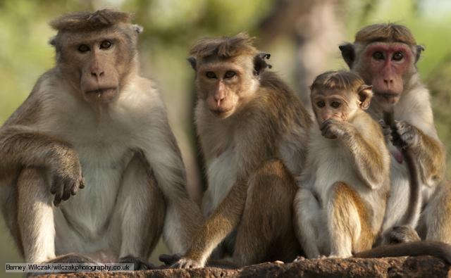 69ae9bd9ee34ca Indonesian authorities wage war on rampaging macaques – THE PARROT